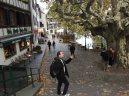 pef_arbre