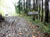pef_forêt